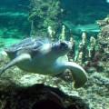 A sea turtle at Aquarium of Genoa, by Eric Borda