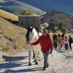 Trekking with horses