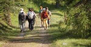 Pila nordic walking