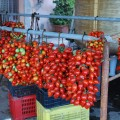 Herculaneum grape tomatoes