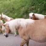 Agriturismo's horses