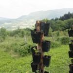 I Rodi's fields