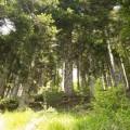 hike inthe wood
