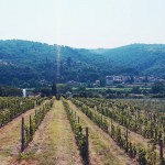 Tuscany view, Pic by Volunteers of Legambiente Prato