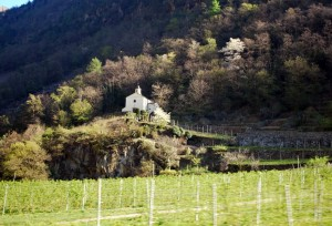 Valtellina's vineyards
