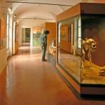 Archeological Museum Finale Ligure