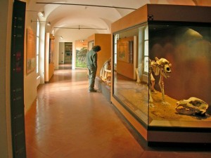 Archeological Museum Finale Ligure