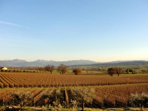 Sagrantino's vineyard, pic by Flickr User Umbria Lovers