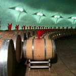 Sagrantino's barrels, Castelbuono property