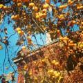 Milan: Brera botanical garden