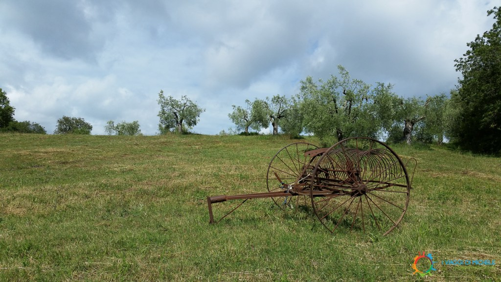 A glimpse at Montemerano's countryside
