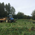 Farming, in Val di Gresta