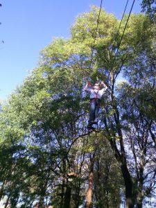 Tree Experience in Milan