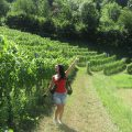 Roxana in the vineyards
