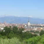 Turin, from the urban vineyard