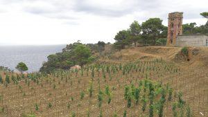 Farming in Gorgona