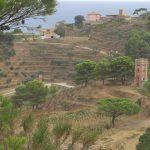 Gorgona, view