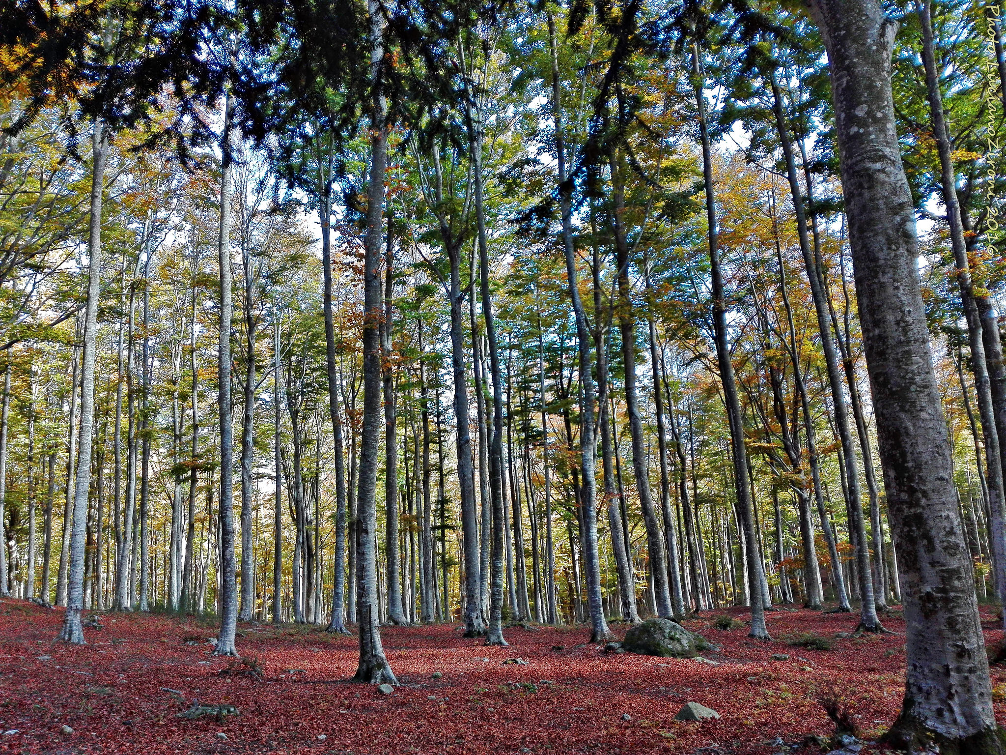 Mount Amiata Woods, Pic by Flickr User Luciano Zironi