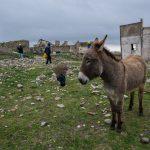 Basilicata: Donkey at Craco