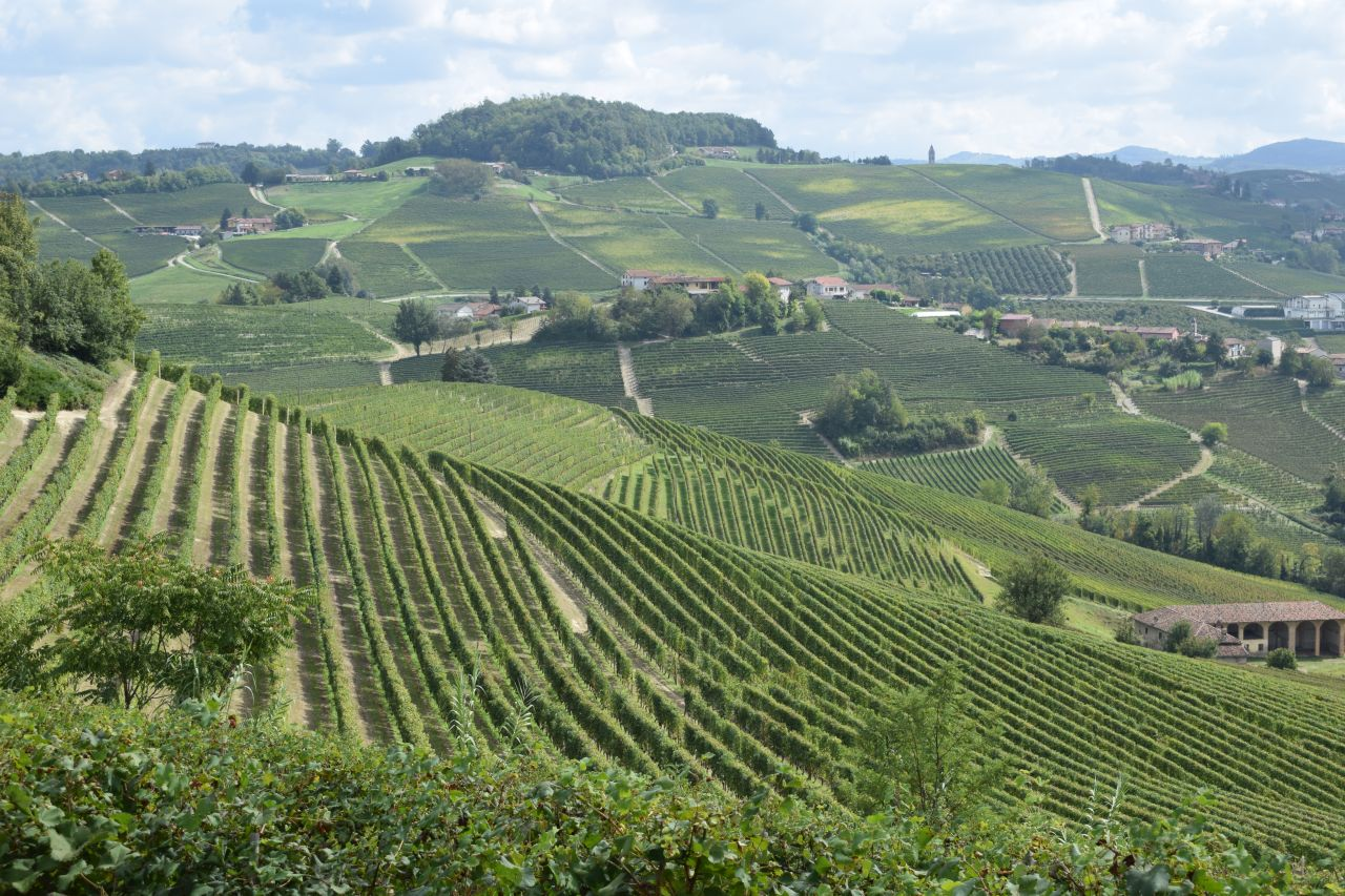 The Vineyard Landscape of Langhe