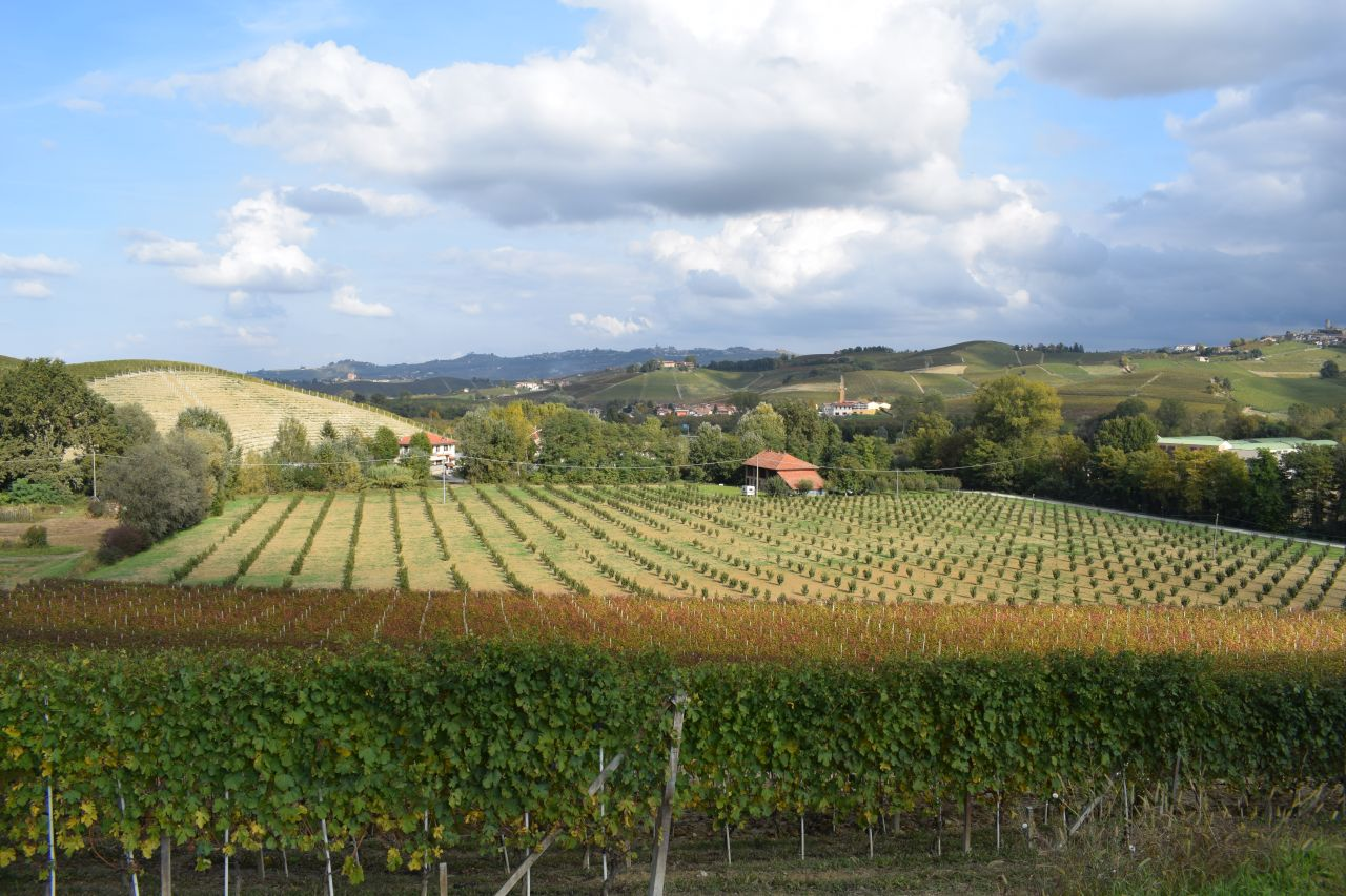 In the Surroundings of Barolo