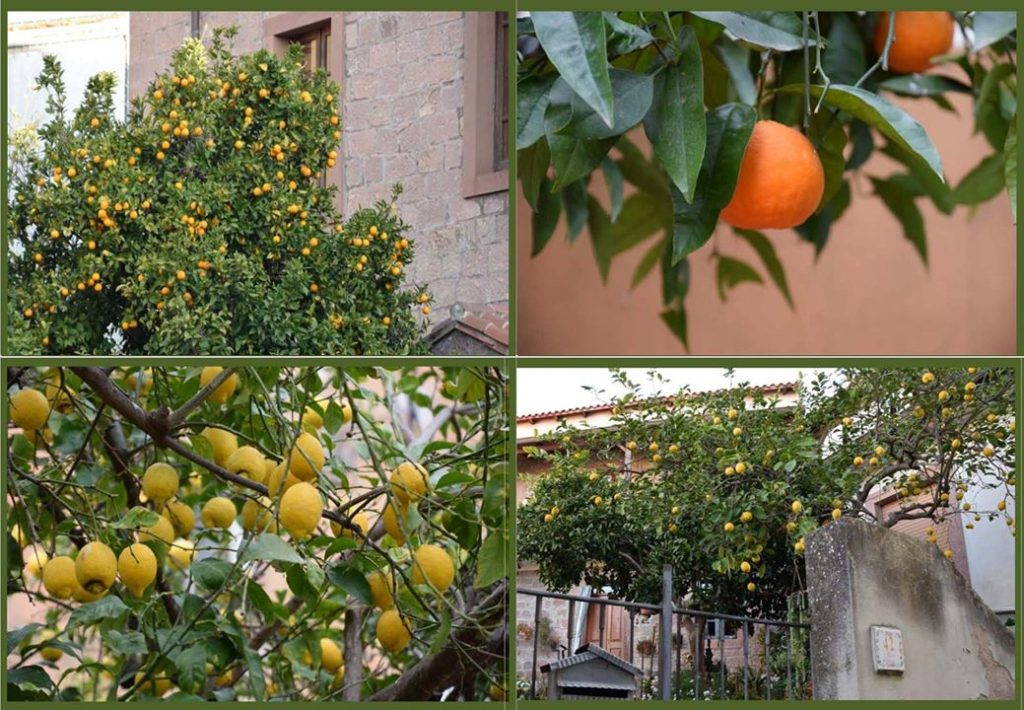 Samugheo, lemon and orange trees abound everywhere throughout the town